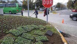 Tokatta, 130 bin mevsimlik çiçek toprakla buluşuyor