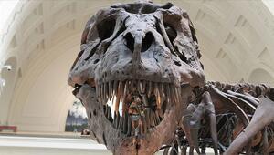Asteroit dünyaya çarpmasaydı dinozorlar varlığını sürdürecekti