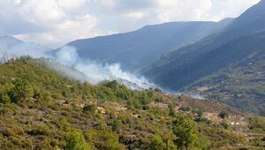 Özel ağaçlandırma sahasında yangın