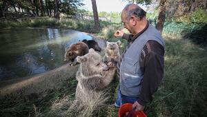 Türkiyenin tek ayı barınağı Ovakorusunun maskotu oldular
