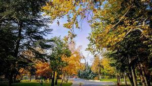 Kampüste sahipsiz sonbahar güzelliği