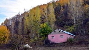 Muşta sonbaharın güzellikleri fotoğraf kareleriyle ölümsüzleştirildi