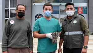 Tüfekle vurulan yaralı baykuş tedaviye alındı