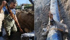 Suların az akmasının nedeni belli oldu İçme suyu hattından 5 metrelik kunduz çıktı