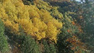 Simavda sonbahar güzelliği