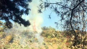 Son dakika... Muğlada orman yangını