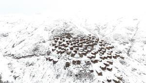 Artvinde harika kar manzarası... Ahşap evleri ile ünlü yayla görenleri hayran bıraktı