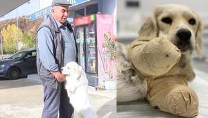 Samsun'da patileri kesilen Pamukun sahibi: Vuran değil de, sahibi ve komşusu suçlu gösteriliyor