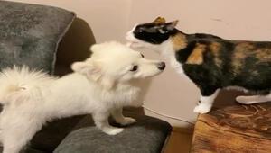Aynı evde büyüyen kedi ve köpek, uzun süre sonra bir araya geldi