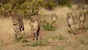 Dünyanın en zengin hayvan rezervlerinin bulunduğu Etosha Milli Parkı