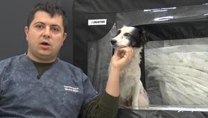 Balıkesirde otomobilin ezdiği köpek yaşama tutundu, adı Maske koyuldu