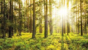 'Yeşil alanlar arttırılmalı'