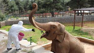 Gaziantepte hayvanlara özel kış menüsü