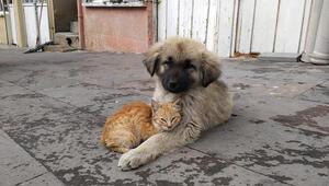 Yavru köpek ve kedinin dostluğu