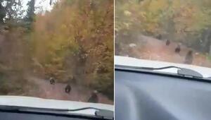 Kastamonuda köy yolundaki 4 ayı yavrusunu cep telefonu ile görüntülediler