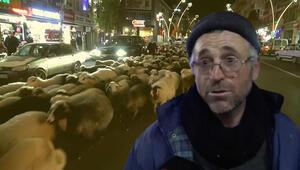 Trafik durdu, koyun sürüsü geçti: İlginç görüntüler oluştu