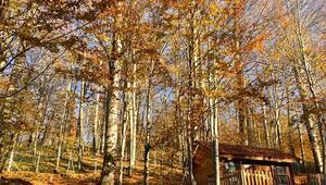 Eriklitepe Tabiat Parkı'nda sonbahar güzelliği