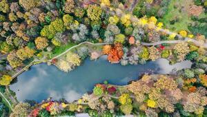 Türünün en büyük örneklerinden biri... Atatürk Arboretumunda sonbahar bir başka