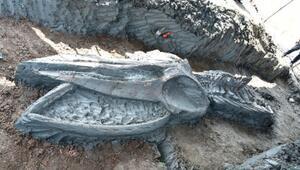 Tayland sınırlarında 5 bin yıllık balina iskeleti bulundu