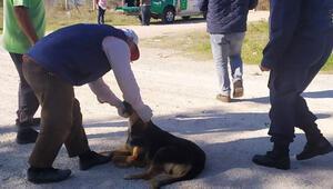 Çanakkale'de terk edilen köpeklere jandarma sahip çıktı