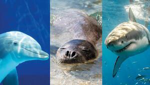 Akdeniz'in hassas canlıları için uluslararası koruma