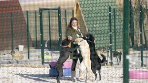 Gönüllülerden hayvan barınağı