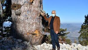 Anıt ağaç alanı milli park olmalı