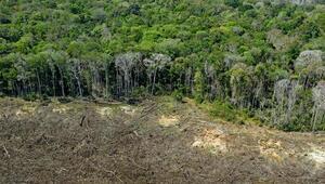 Amazon yağmur ormanlarındaki kayıp son 12 yılın en yüksek seviyesine çıktı