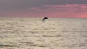 Gün batımında sahile 100 metre uzakta yunusların muhteşem şovu