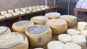 Karsta dört mevsim peynir üretiyorlar Lezzetinin ve renginin sırrı bakın neymiş