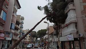Çam ağacı apartmanın üzerine devrildi