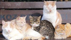 Sokak hayvanları için 14 milyon lira ödenek