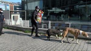Esenyurtta polis ekipleri sokak hayvanları için mama bıraktı