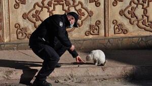 Polis, kısıtlamada sokak hayvanlarını besledi