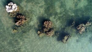 Van Gölü çekilince ortaya çıktı Dünyanın en büyük mikrobiyaliti...