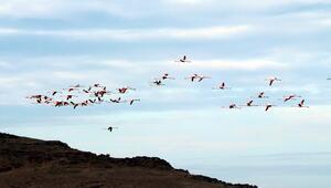 Küresel iklim değişimi flamingoları etkiledi, son 10 yıldır gitmiyorlar