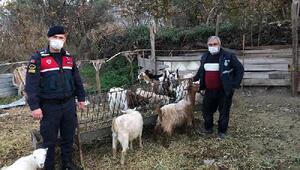 Eskişehirde 12 keçiyi çalıp, satan şüpheliler yakalandı