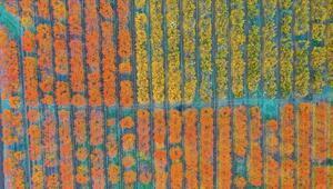 Amanoslar sonbahar renkleriyle kartpostallık görüntüler oluşturdu