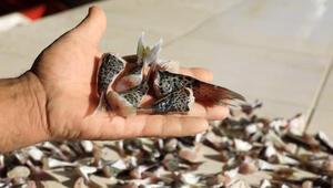 Son dakika haberler: Balon balığı kuyruğu teslimatı başladı.. Kuyruk başına 5 TL ödeme yapılıyor..