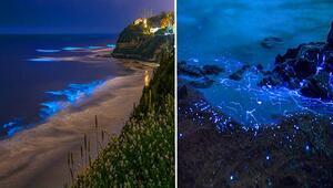 Photoshop değil gerçek Denizde ışık saçan canlılar şaşırttı...
