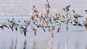 'Ankara'nın kuşları da...'