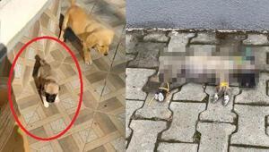 Dehşete düşüren görüntü Yavru köpek böyle bulundu...