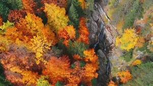 İnegöl ormanlarında mest eden görüntüler