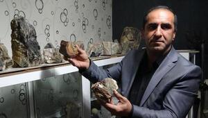 Erzurumda, 160 milyon yıllık fosil ağaç kalıntıları bulundu
