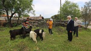 Muğlalı 140 kadın üreticiye 420 kıl keçisi dağıtıldı
