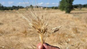 Diş buğdayı nedir Diş buğdayı geleneğinin detayları