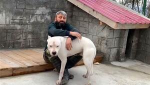 El konulan 'yasak ırk' üç köpeği için her gün 160 kilometre yol gidiyor