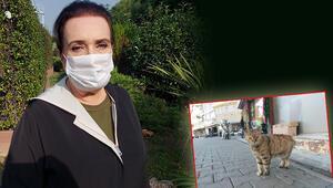 Son dakika haberler: Kayıp kediler için korkunç iddia Hayvan severler tedirgin