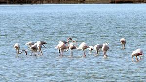 Tuzla Sulak Alanında göçmen kuş akını yaşanıyor