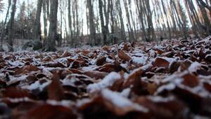 Abantta sonbahardan kalma yapraklara kar örtüsü